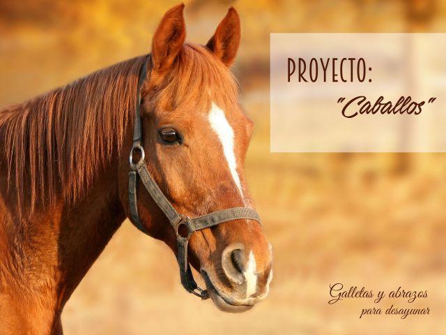 Proyecto caballos